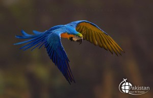 Birds of Northern Pakistan in different colors