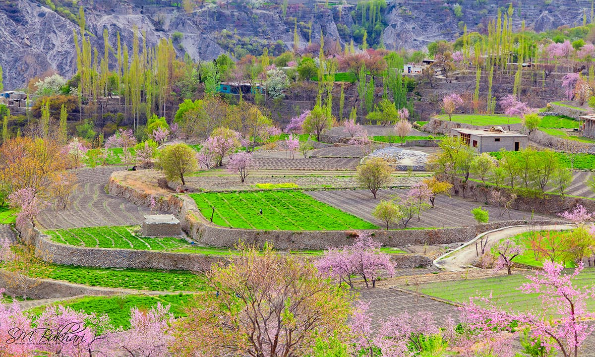 Spring Season Hunza