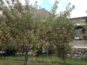 Diran Guest House Apple Tree awesome
