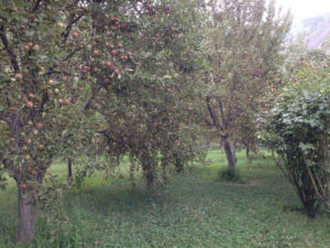 Diran Guest House Apple Garden in Minapin