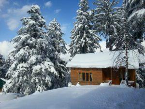 Arcadian Spruce woods in Winters in Shogran Valley