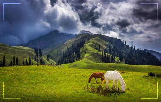Shogran Valley Honeymoon Tours