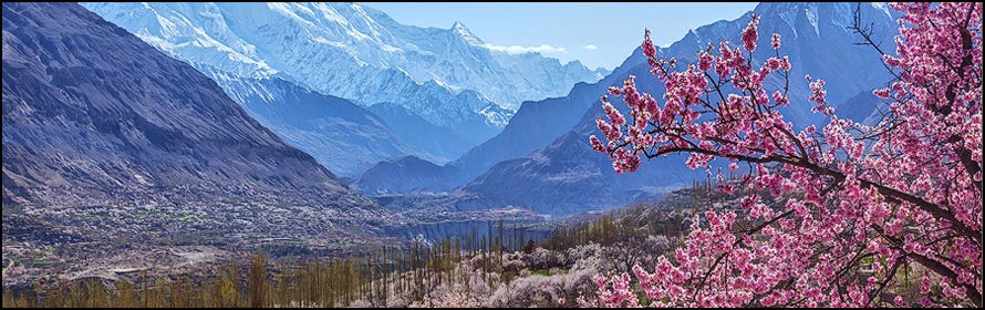 Cherry blossom view hunza 2018