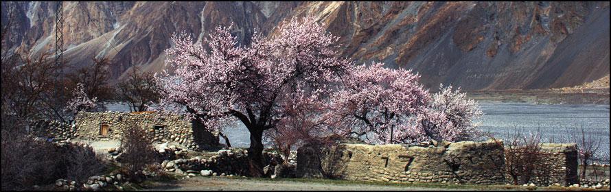 Hunza Cherry Blossom 2018 Tours