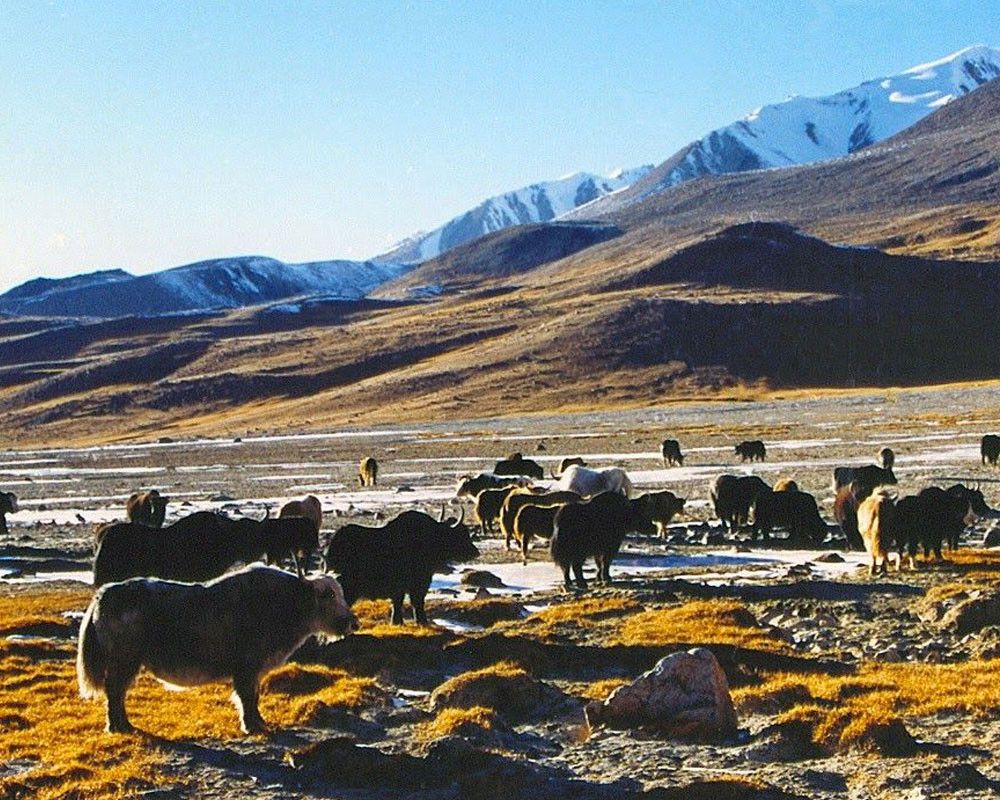 Khunjerab-National-Park