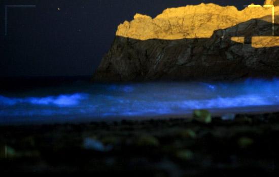 This Bioluminescent Beach in Pakistan Image 4