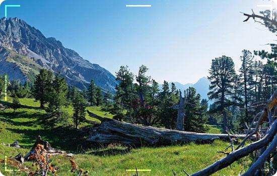 Swiss-National-Park-Zernez